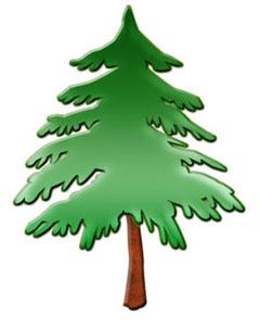 Christmas Tree - Pine Tree