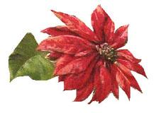 Vintage Christmas Pointsettia Clipart