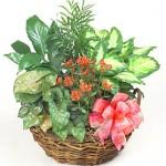 Green Plant Garden Basket