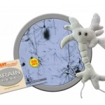GIANTmicrobes® Brain Cell