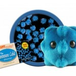 GIANTmicrobes® Common Cold