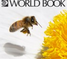 The World Book Encyclopedia Set