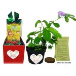 TickleMe Plant Christmas Gift Box Set