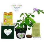 TickleMe Plant Gift Plant Box Set for Dad