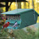 BIRDS choice™ Squirrel-Proof Bird Feeder