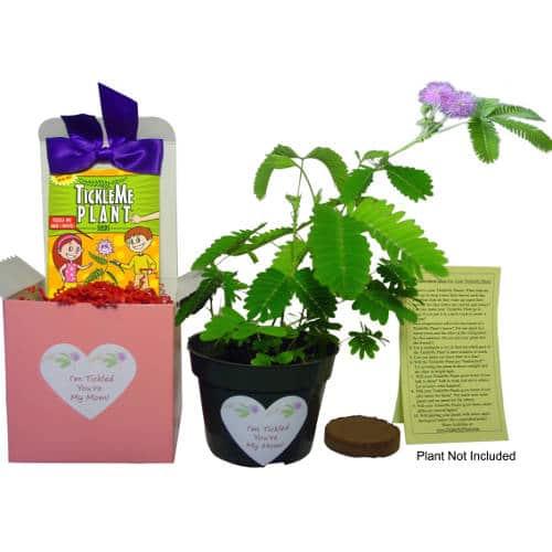 TickleMe Plant Gift Plant Box Set For Mom