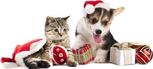 Christmas gifts wish lists for pets