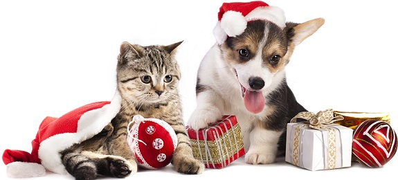 cat dog christmas gifts for your pets