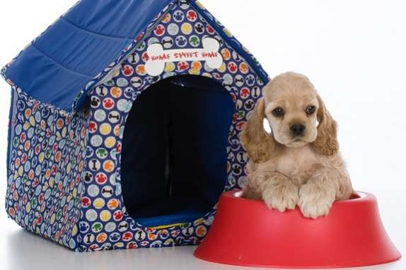 christmas gifts for your pets dog dish