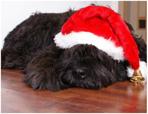 Functional Christmas Gifts for Dog Owners